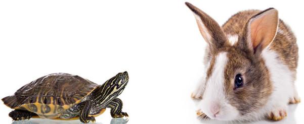 Leadership-Presence-Tortoise-Hare