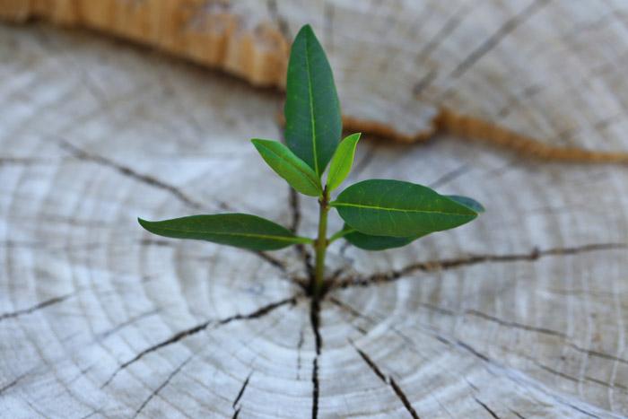 Leadership-Vision-Roots